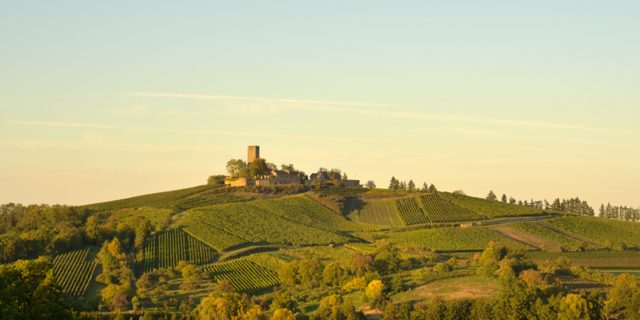 Weingut Burg Ravensburg